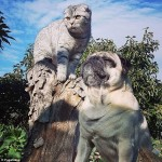 Pug and cat travel
