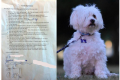 Funny dad dog contract