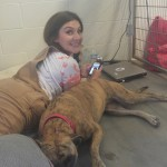 Shelter worker living with dog in kennel