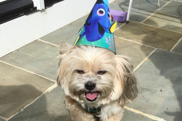 Scamp in party hat