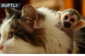 Squirrel Monkey video