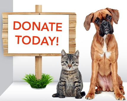 Give Back - Donate To An Animal Rescue or Shelter In Need