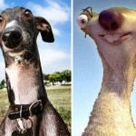 Animal look alikes