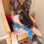 Special dog chair