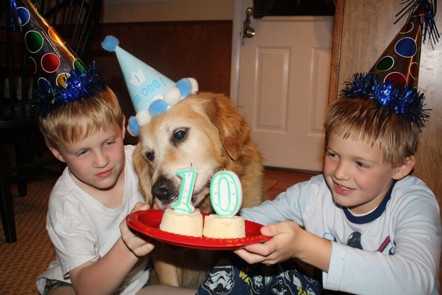 Dog birthday