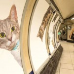 Cats advertising train station