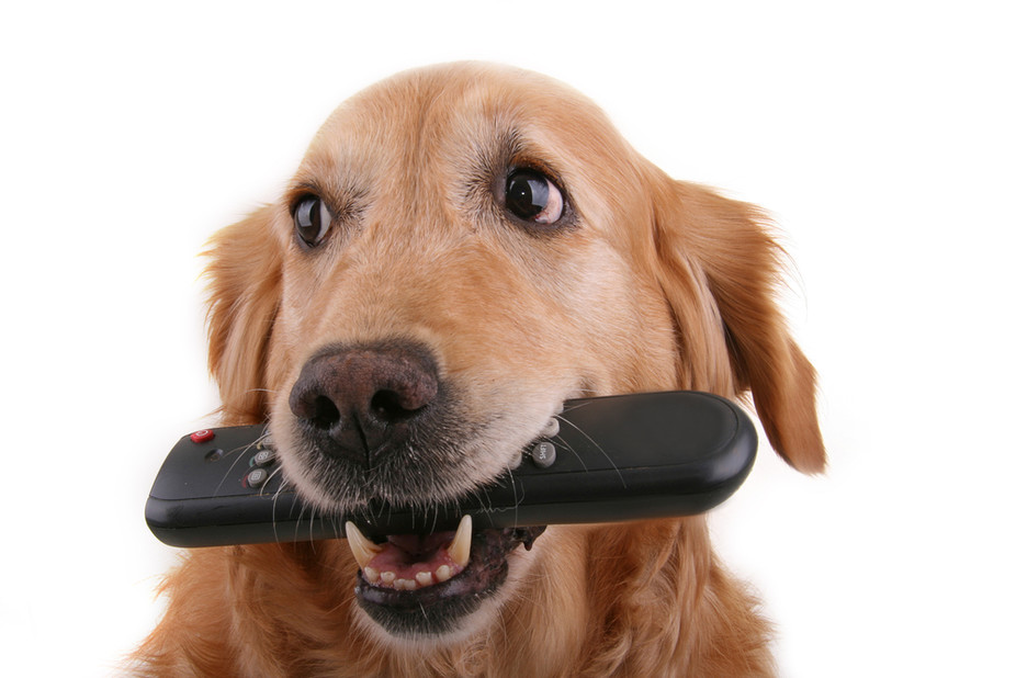 dog with tv remote