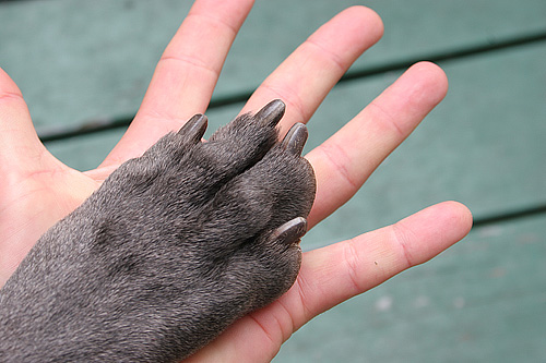 Living_hand_to_paw