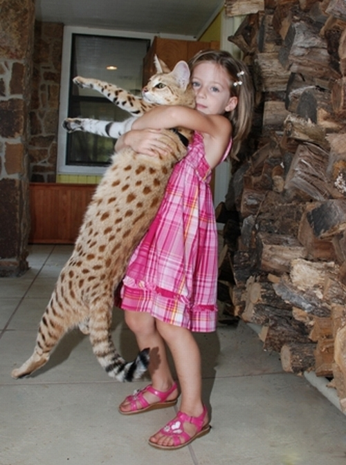 savannahcat7
