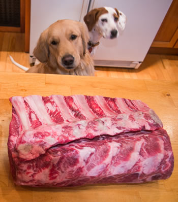 Can I Give My Dog Frozen Meat