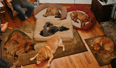 All the dogs are sleeping