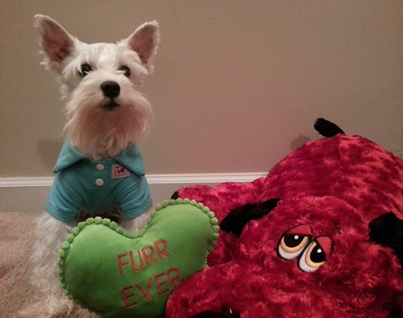 Valentine S Day Dog Toys : A dog s letter to his valentine