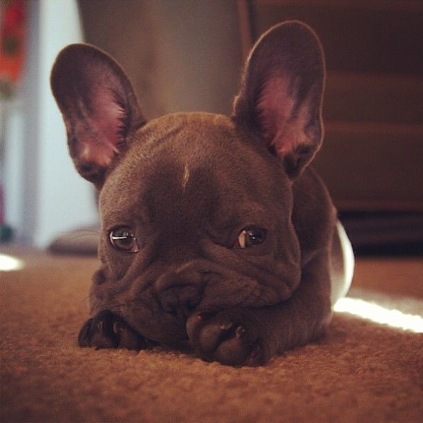 The 20 Important Facts Dog Lovers Must Never Forget Sad Bulldog Face