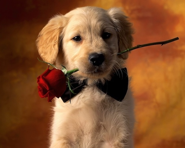 puppy love: why your dog should be your valentine's day date, Ideas