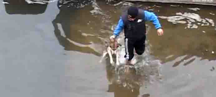 dog saved from icy water