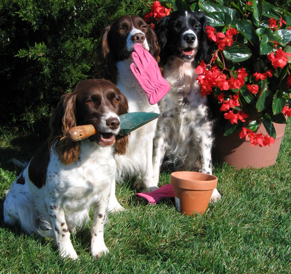 8 Backyard Ideas To Delight Your Dog: Spring Tips: Keep Your Dogs Safe While Gardening