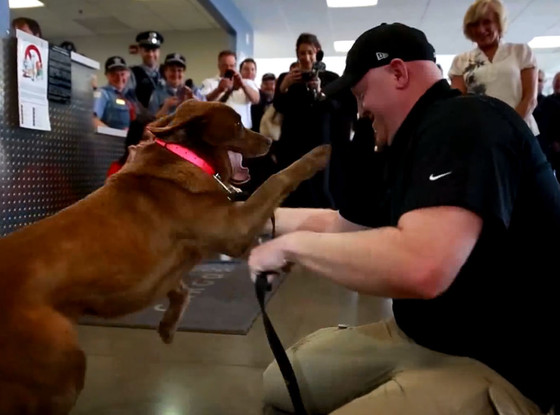 veteran reunited with bomb sniffing dog