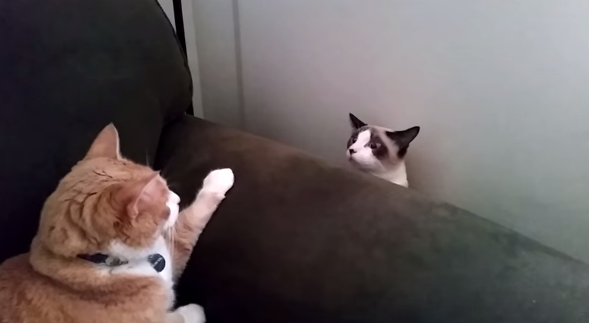 2 cats meet for the fist time