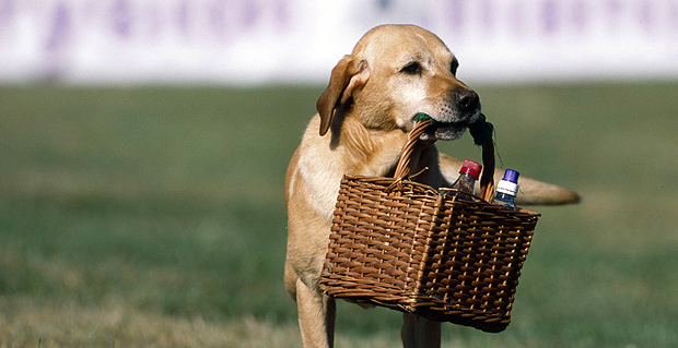 dog-with-picnic-basket-summer