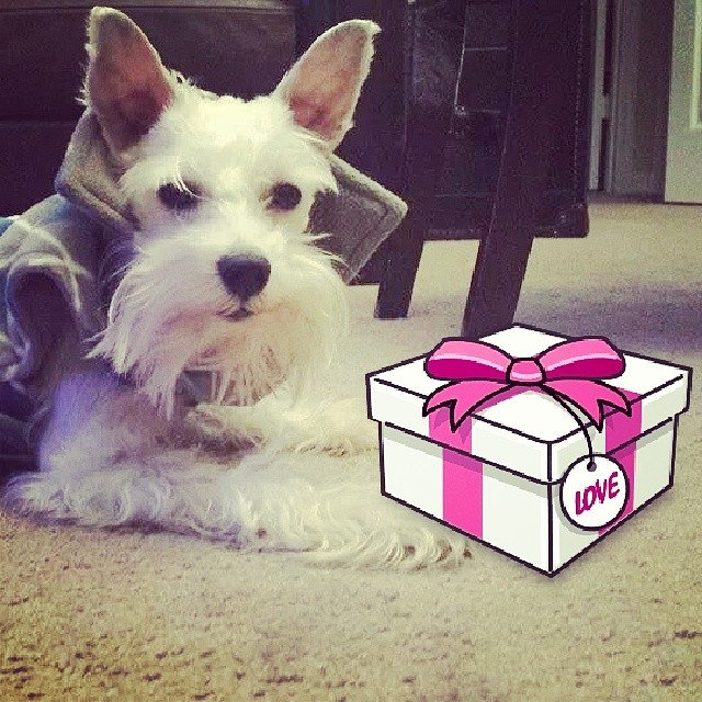 dog gift ideas for dog lover & Fatheru0027s Day Gift Ideas for Dog Lovers