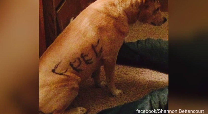 dog with free written on fur