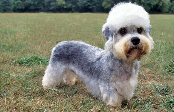 15 Rare Dog Breeds You Probably Never Heard Of