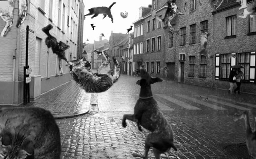 Raining Cats And Dogs Song