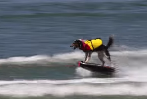 Uggie can wakeboard