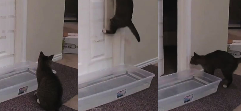 cat jumping at door handle