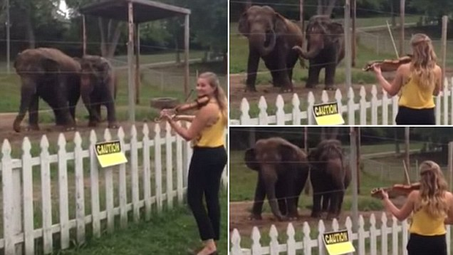 elephant loves violin