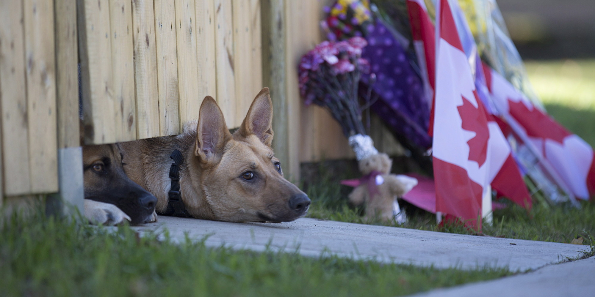 Congress Votes To Reunited Military Dogs With Their Handlers
