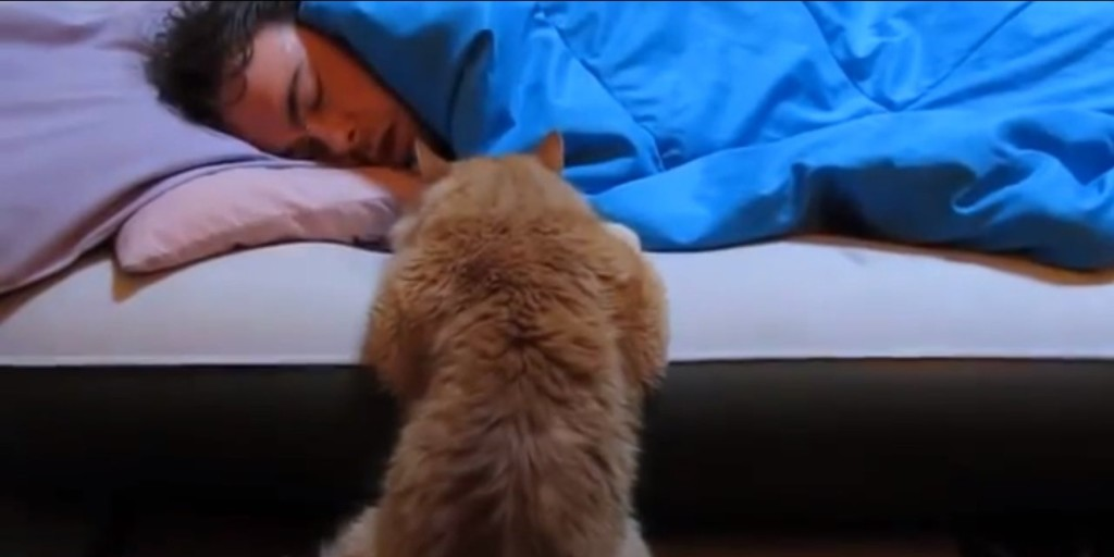 Cute Cats Waking Up Owners In The Morning