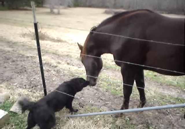 Dog and horse are best friends