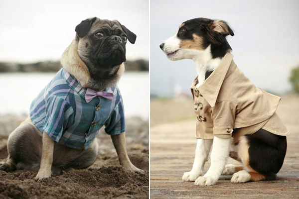 rover-dog-stylish-clothing-1