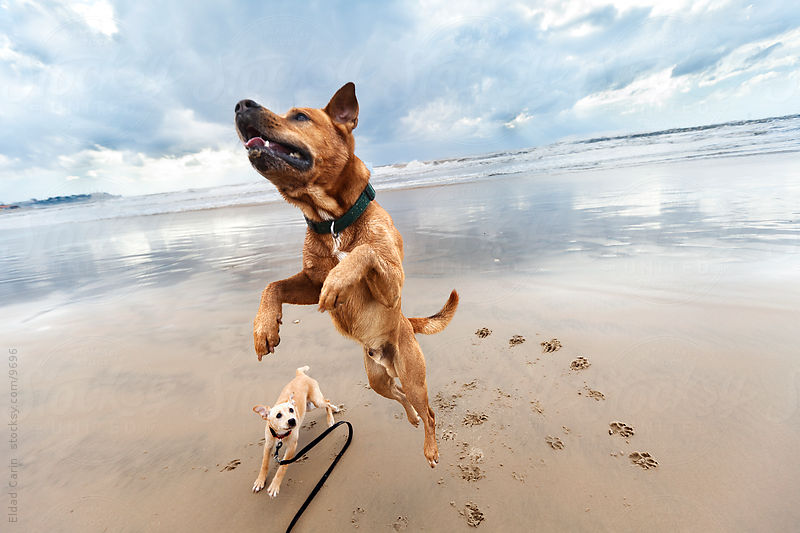 Jumping Mid-Air Winter Beach Dog & Puppy