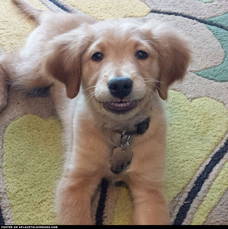 cutest-puppy-grin