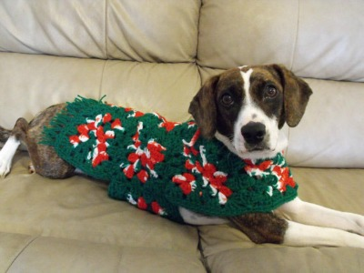 dog-knitted-christmas-ugly-sweater