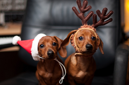 8 Adorable Christmas Photos You Must Try With Your Dog This December