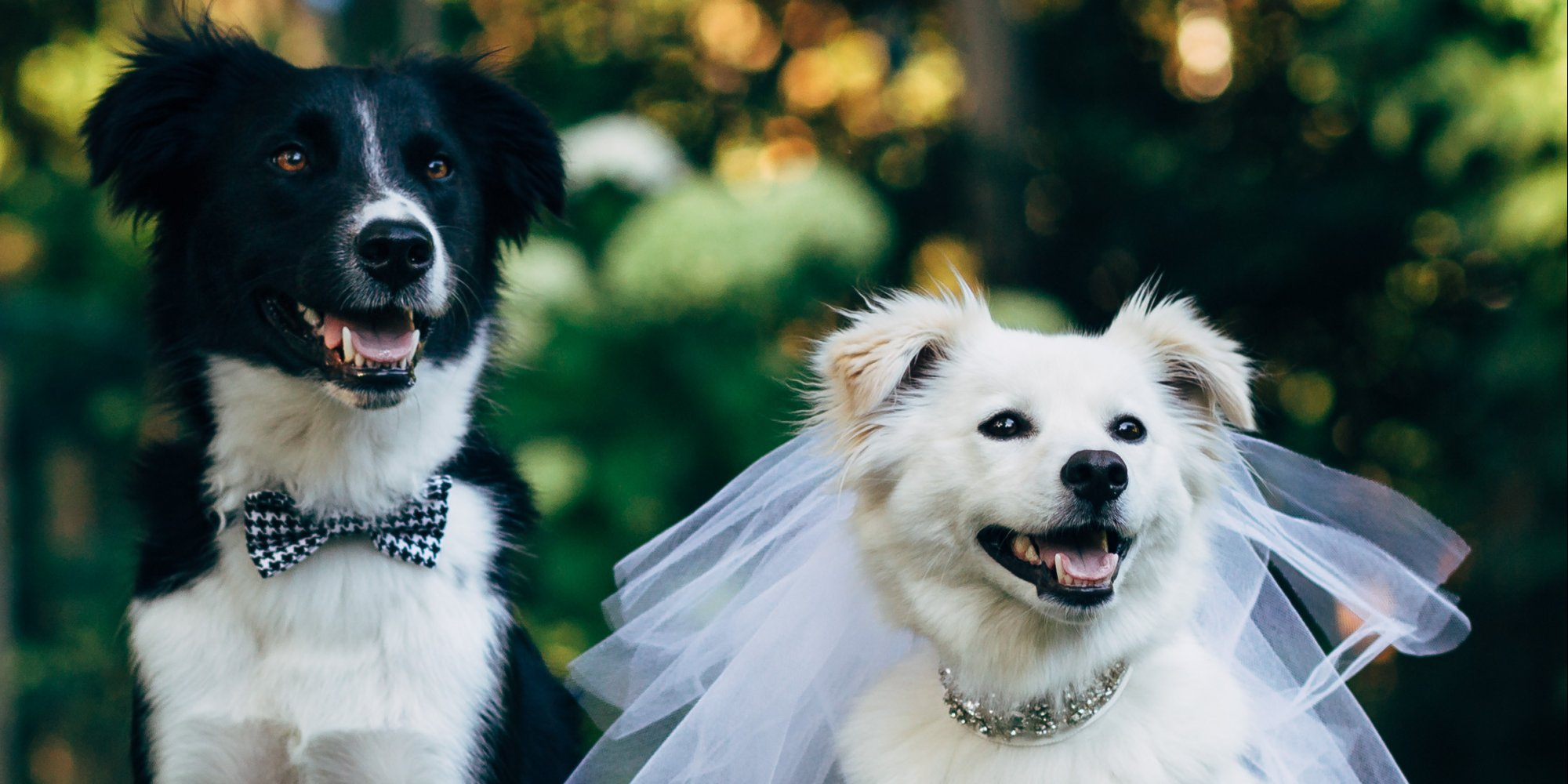 Dog Owner And Dog Getting Married