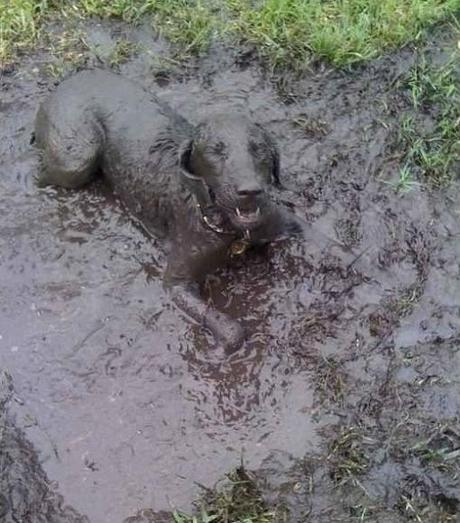 top-10-dogs-covered-in-mud-L-KzOa2o