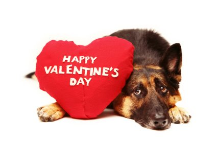 Toll 4 Reasons Why Your Dog Doesnu0027t Want To Be Your Valentine This Year