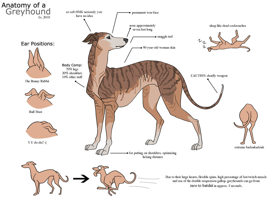 11 Things Greyhounds Want You To Know