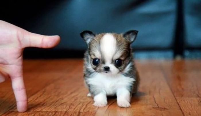 11 Tiny Dogs That Barely Look Like