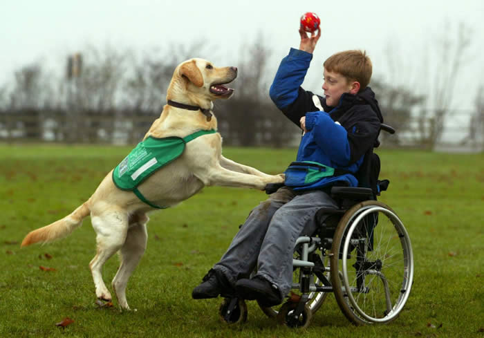 Service Dogs For The Deaf