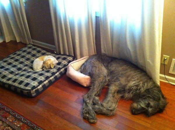 Here S 10 Cats Stealing Dog Beds And Dogs Cat