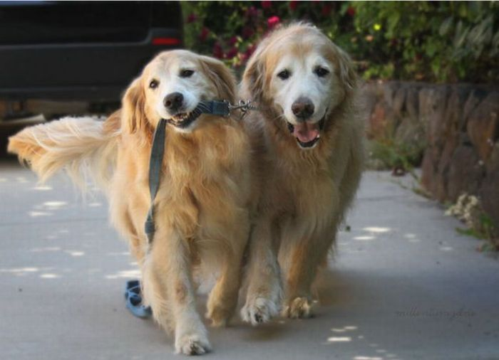 Image of: Two Dogs Happy Dog Fun Providing Dog Walking Pet Sitting And Other Dog 12 Dogs Walking Dogs