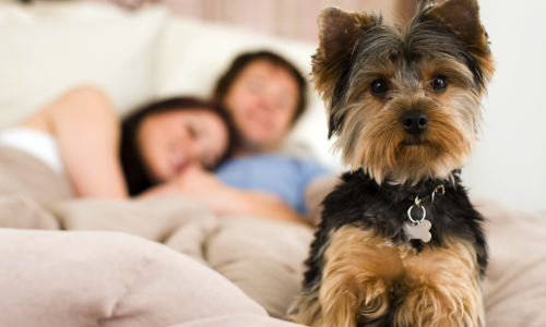 10 Of The Best Apartment Dogs