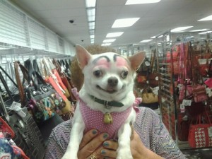 dog-with-eyebrows-6