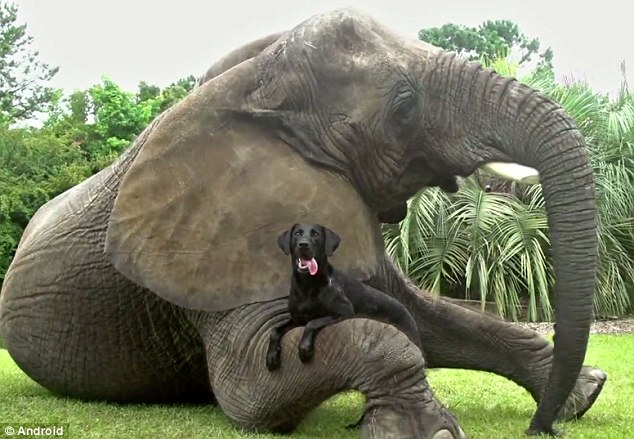 Dog and elephant are best friends