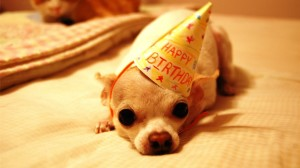 happy-birthday-funny-dog-HD-wallpaper